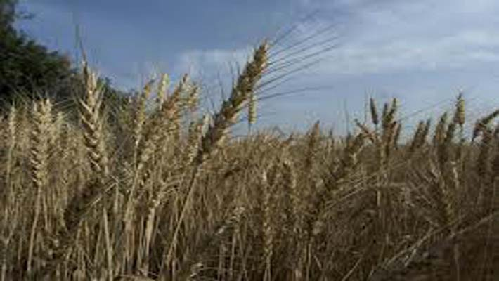Brisk sowing of Rabi crops in last one week; Country heading for a bumper crop this year