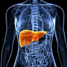 Fatty Liver: Home Remedies And Cures