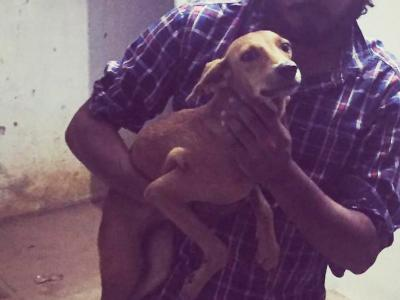 Dog thrown off roof in Chennai alive, undergoing treatment : Police