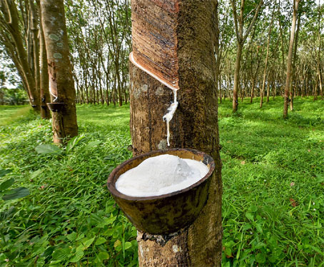 Rubber price highest in 7 years at Rs 170 a kg