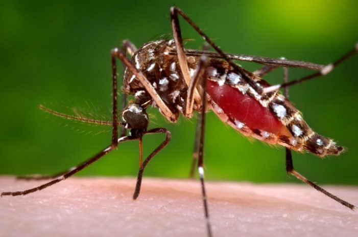 Zika virus infection confirmed in Kerala for the first time