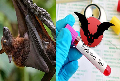 11 people have Nipah symptoms; Covid vaccination drive halted in Kozhikode taluk for 2 days
